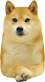 Doge Front Face