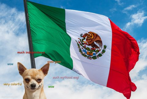 Chihuahua next to colorful flag of Mexico. Much independence. Such mythical eagle. Guau guagu.