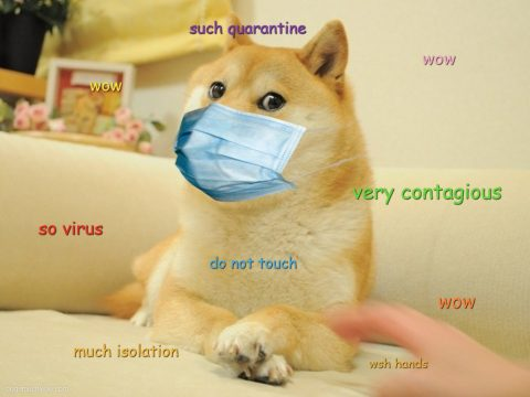 Doge wearing mask. Hand going in for the doge in right bottom corner. So virus. Very contagious. Such quarantine. Wow.