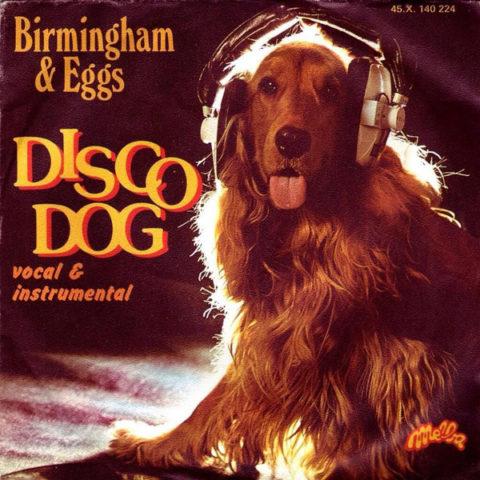 Birmingham & Eggs Disco Dog album cover. Dog with headphones running disco.