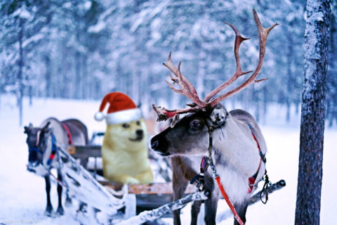 Christmas wallpaper: Doge leading a reindeer team. Much snow. Wow.