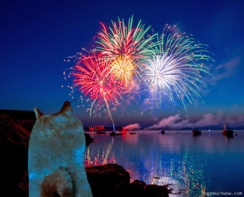 Doge watching new years fireworks. Wow.