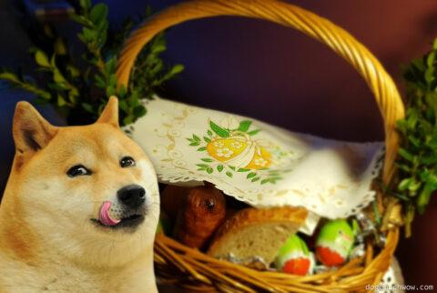 """Doge savoring """"Święconka"""" - Polish Easter Basket. Wow."""
