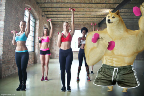 Swole Doge during workout with the girls. Wow.