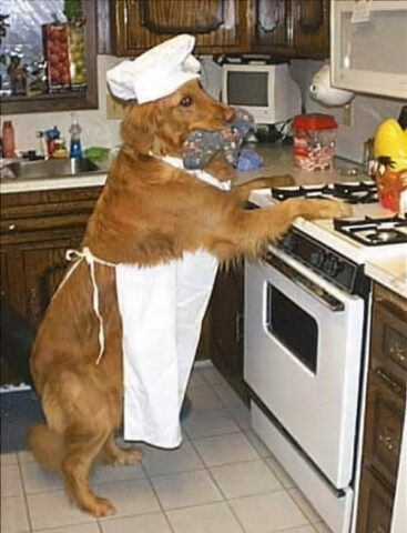 Cursed Food Image: Dog preparing food in the kitchen. It's going to be special. Wow.