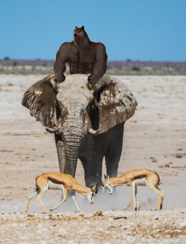 Black African Doge riding an elephant while antilopes fight.