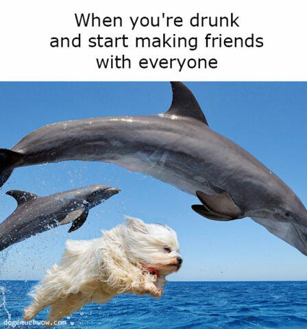 Deep visual thinking part 10. Dog swimming with dolphins. Caption: When you're drunk and start making friends with everyone.