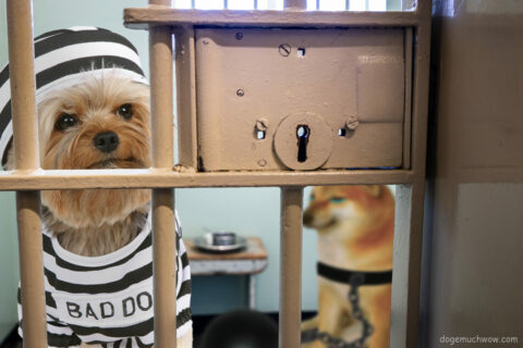 Bad dog and Cheems locked in jail. They used to be good boys. Wow.