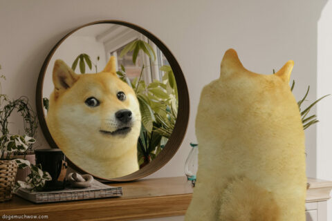 Doge in front of a mirror. Such reflection. Wow.