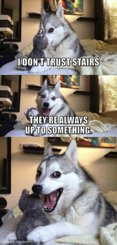 Pun dog meme: I don't trust stairs. They are always up to something.